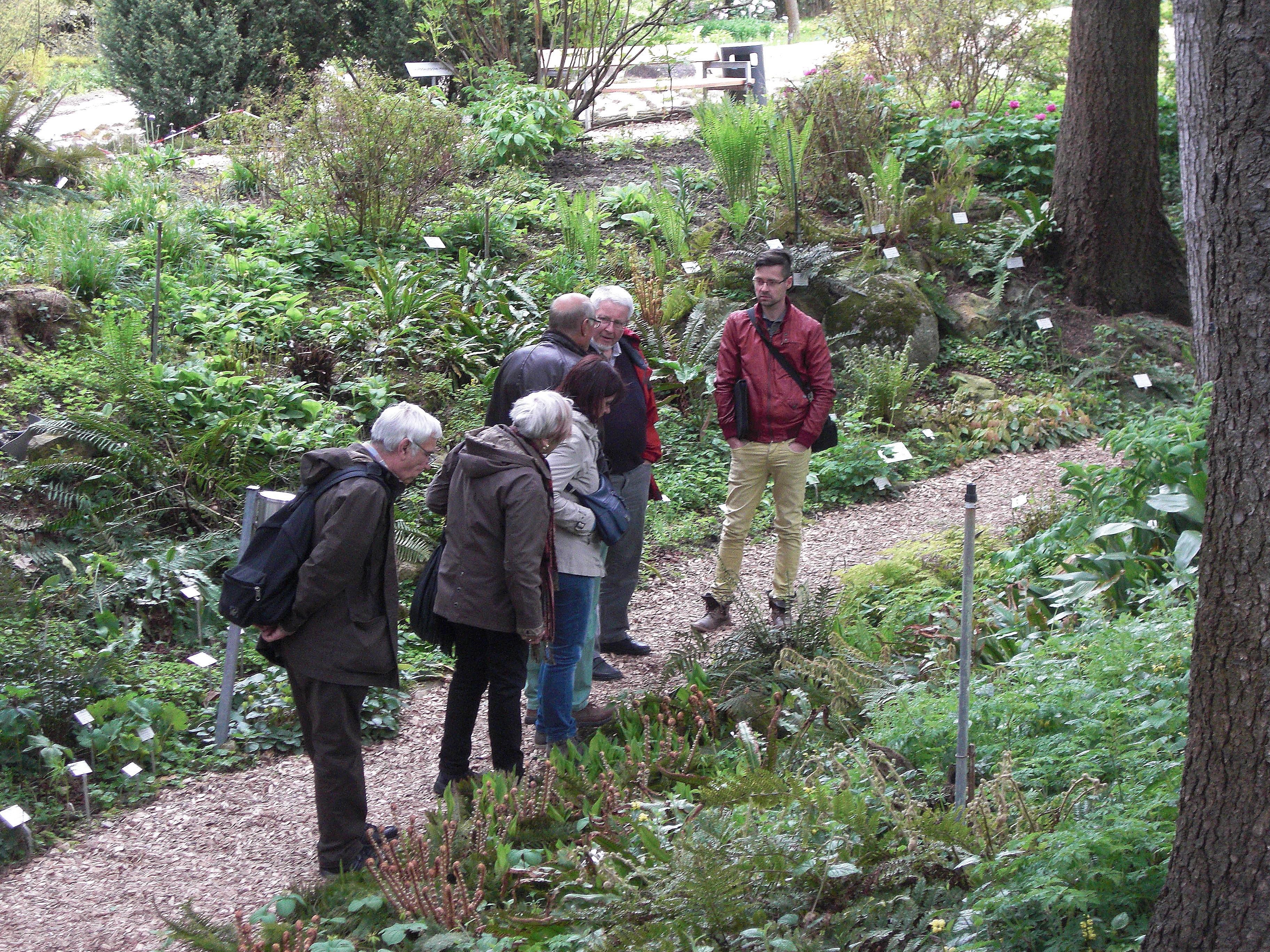 """Abb. 2: In der """"Farnschlucht"""" des Botanischen Gartens (Foto: Matthias Appelt)"""